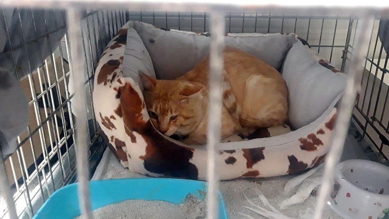 Gato en el interior de una jaula