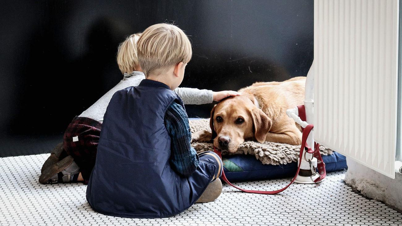 Vacunar de la covid a las mascotas o no, esa es la cuestión