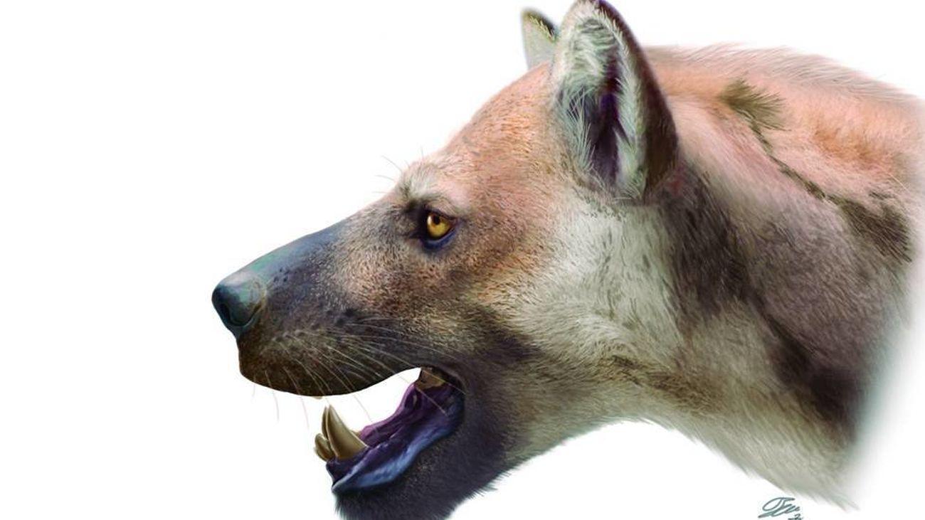 El 'perro-oso' que vivió en Madrid