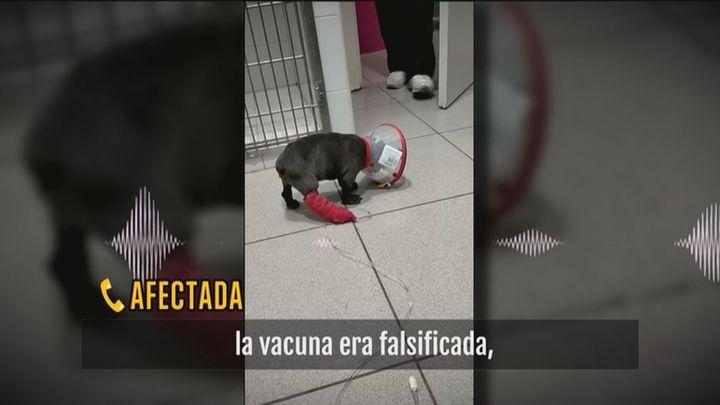 """La presunta estafa con perros enfermos: """"Los venden como si estuvieran sanos y no es así"""""""