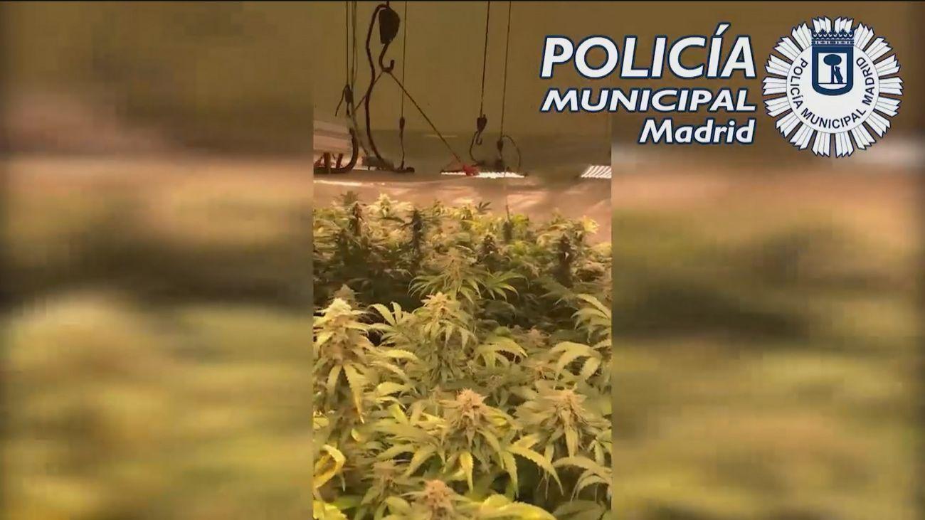 La Policía Municipal interviene un cultivo de marihuana en un sótano comercial de Chamberí
