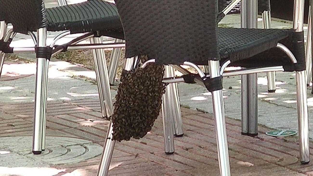 Enjambre creado en una silla de una terraza de Alcorcón