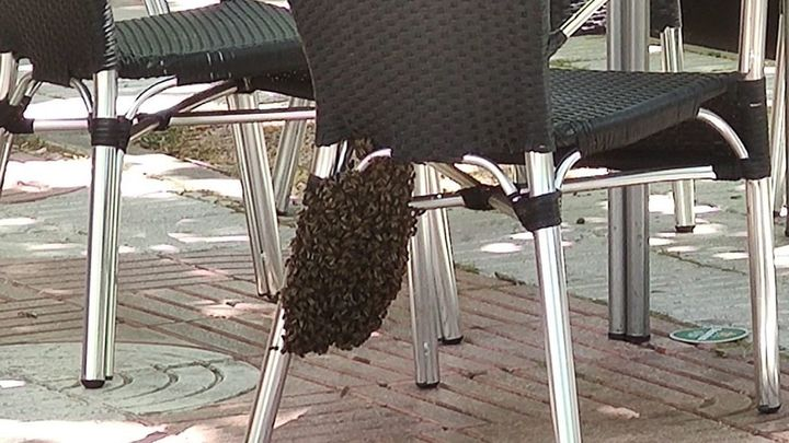 Bomberos de Alcorcón retiran un enjambre de abejas en una terraza