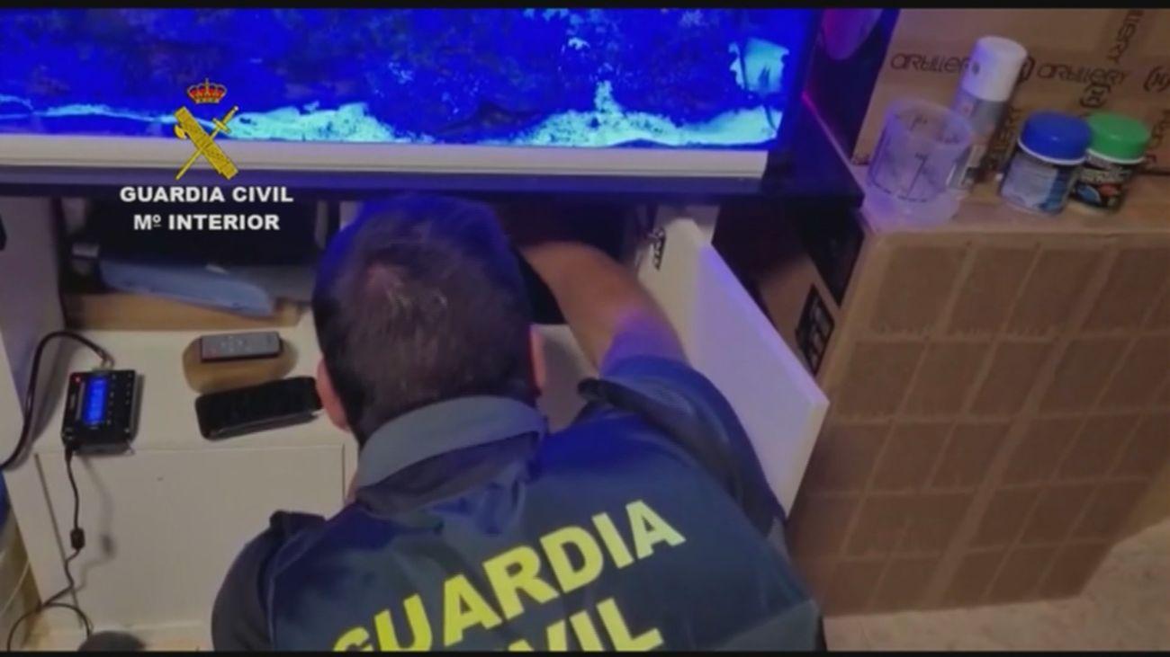 Registro de la Guardia Civil en la vivienda de la mujer detenida en El Alamo