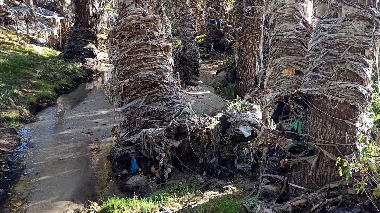 Árboles y vegetación del río Jarama envuelta en toallitas y otros desperdicios