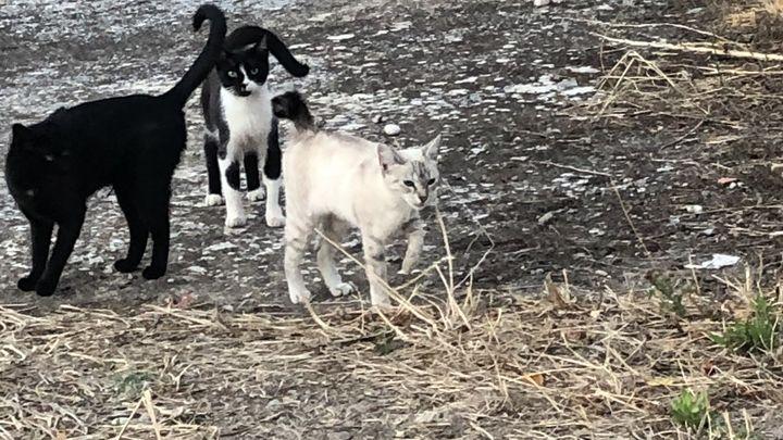 Cuidadores de gatos callejeros, con carnet municipal, en Casarrubuelos