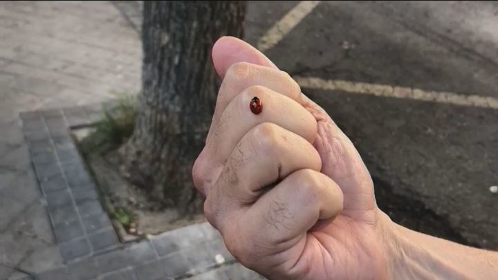 Leganés lucha contra las plagas sin recurrir a insecticidas