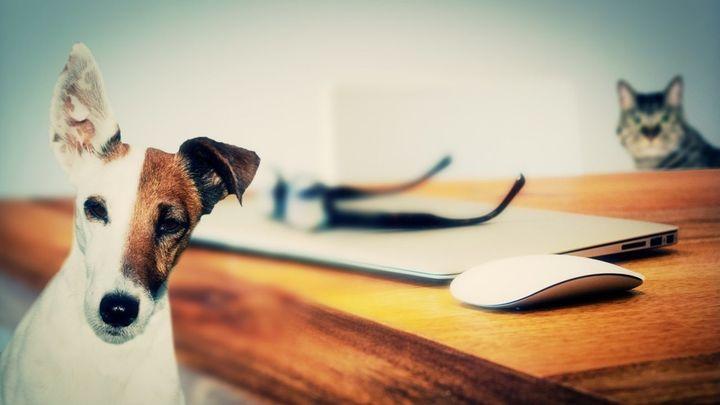 A los perros les gusta el teletrabajo