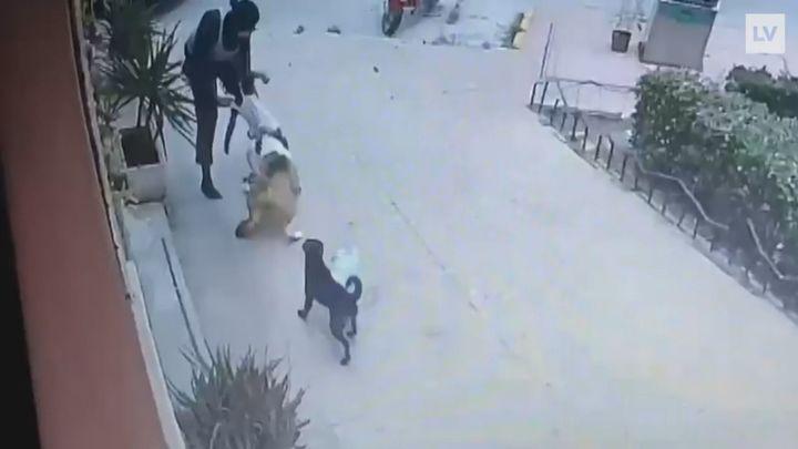 Una veterinaria salva a una niña de un brutal ataque de un perro de presa en Murcia