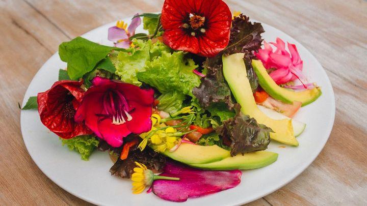 Flores comestibles para incorporar a nuestros platos