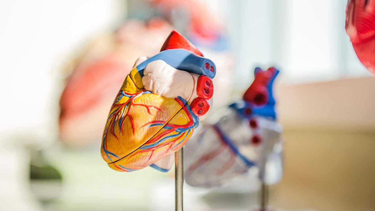 Figura de un corazón en un laboratotio