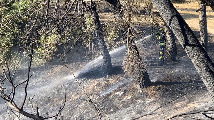 Arden dos hectáreas de pasto bajo y pinos detrás del Hospital Clínico