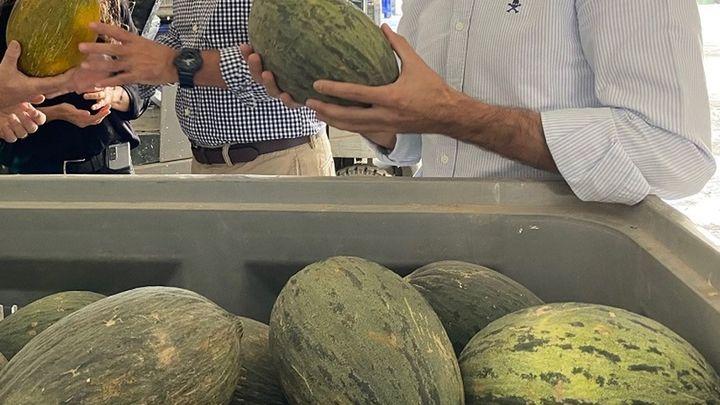 Los melones de Villaconejos, en peligro por los cortes de agua