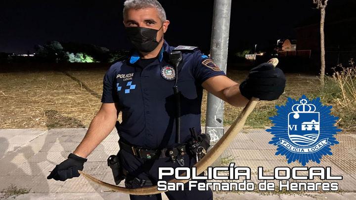 Una culebra 'bastarda' pone en alerta a un vecino de San Fernando