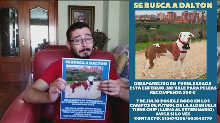 Buscan a Dalton, un perro desaparecido en Fuenlabrada