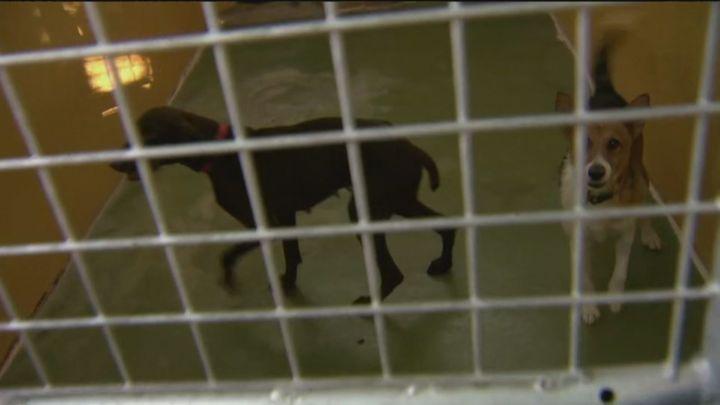 Récord de abandono de mascotas en las protectoras de Madrid tras el fin de las restricciones