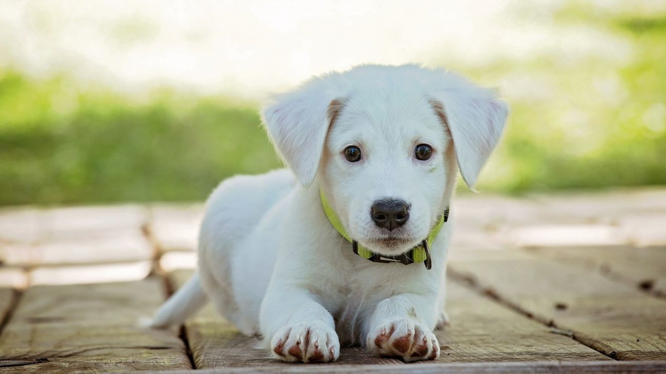 Un cachorro de perro