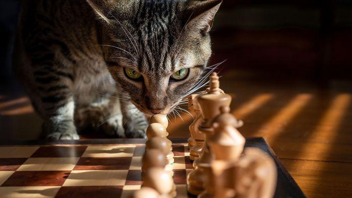 ¿Sabes jugar al ajedrez?