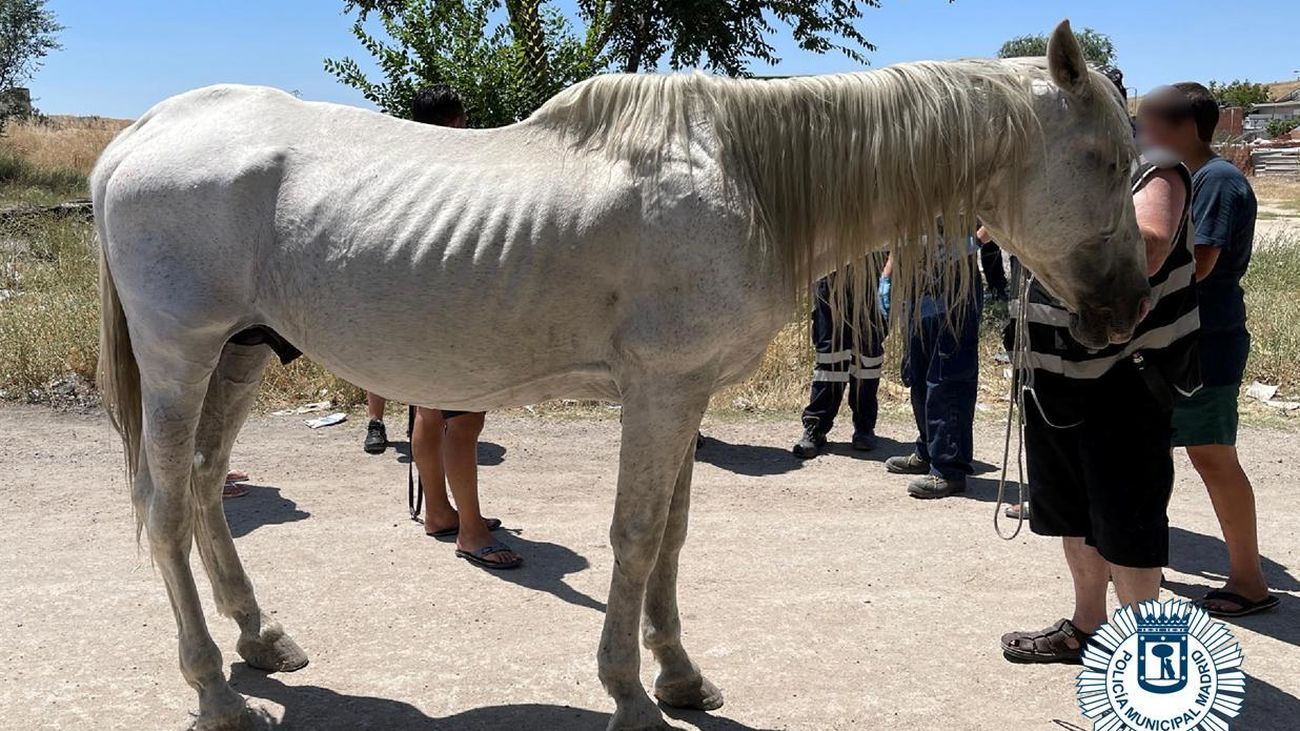 El caballo rescatado por la Policía Muncipal en la Cañada Real de Madrid