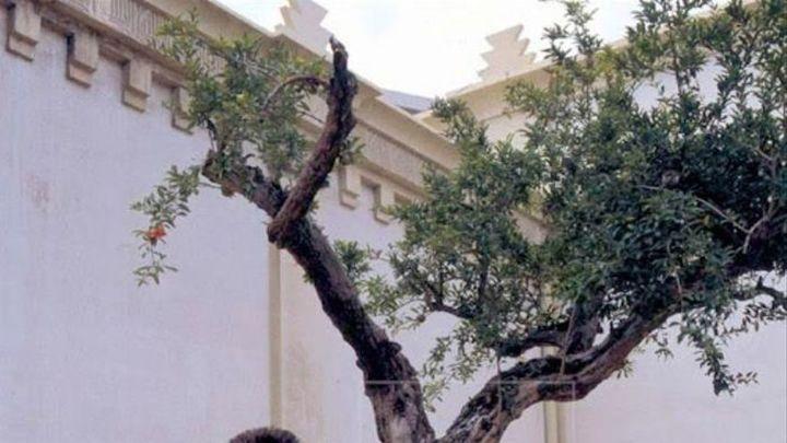"""El proyecto de Yoko Ono """"Wish Tree"""" llega a Madrid en su 25 aniversario"""