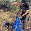 Hallan los cadáveres de 15 cachorros y 87 perros heridos en una finca de Torrelaguna