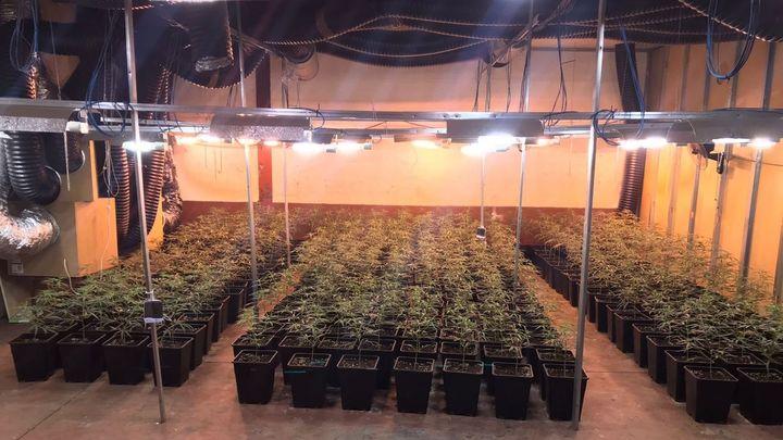 Localizada en Valdemoro una nave industrial con 1.400 plantas de marihuana