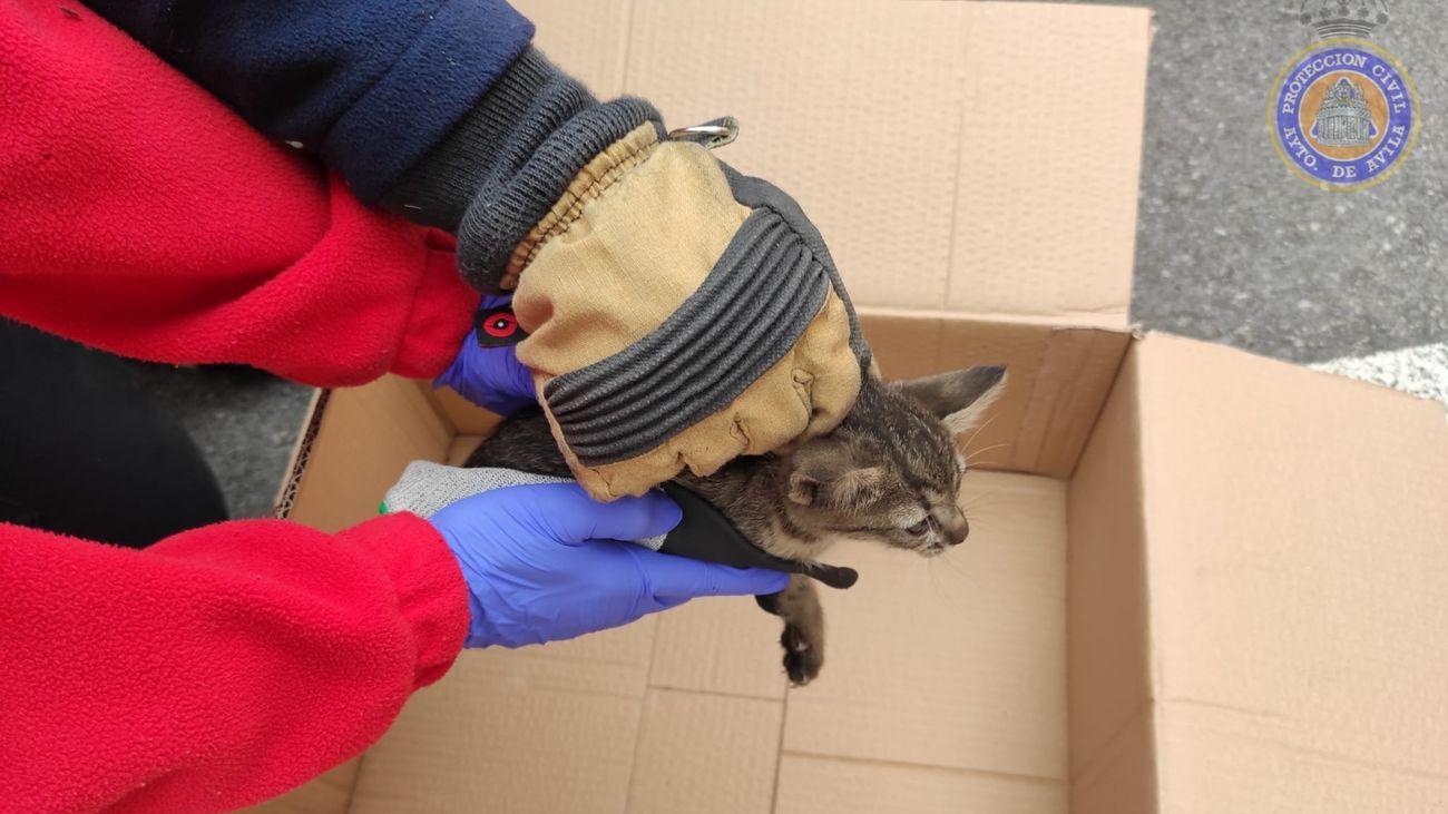 Sanitarios que realizan PCR, vacunan... y salvan gatos