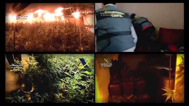 Aumentan las operaciones policiales en Madrid contra las plantaciones de marihuana en interiores