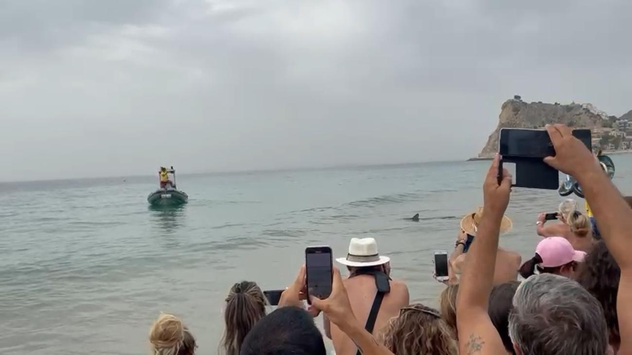 Un tiburón provoca la revolución en la playa de Benidorm
