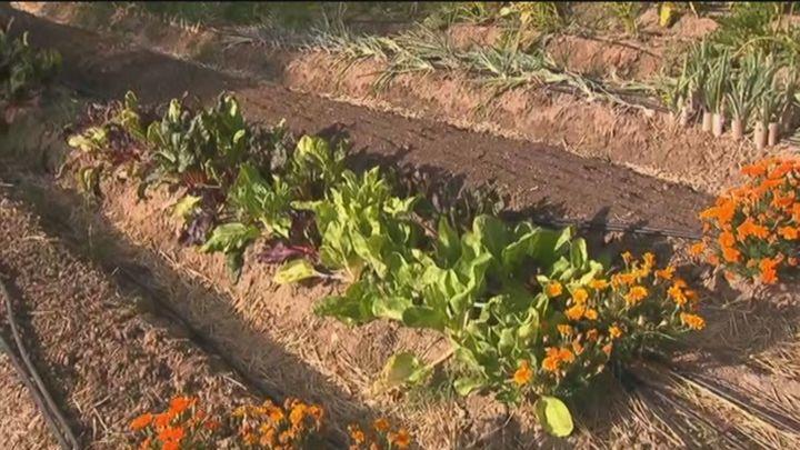 Jóvenes emprendedores ponen en marcha un huerto en un solar urbano de Aravaca