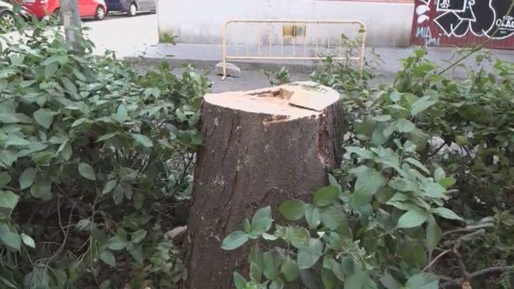 Los vecinos de la Latina denuncian la tala de los árboles centenarios