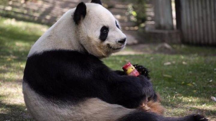 Los animales del Zoo Aquarium de Madrid combaten la ola de calor con helados, aspersores y aire acondicionado