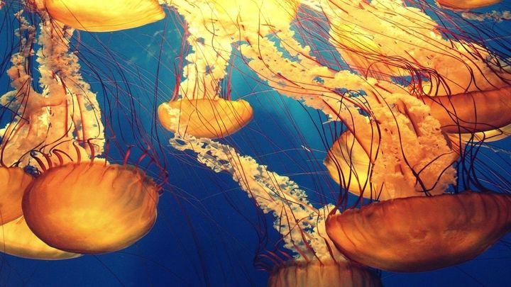 ¿Qué debemos hacer si nos pica una medusa en la playa?