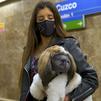 Normas para viajar con nuestras mascotas en el metro