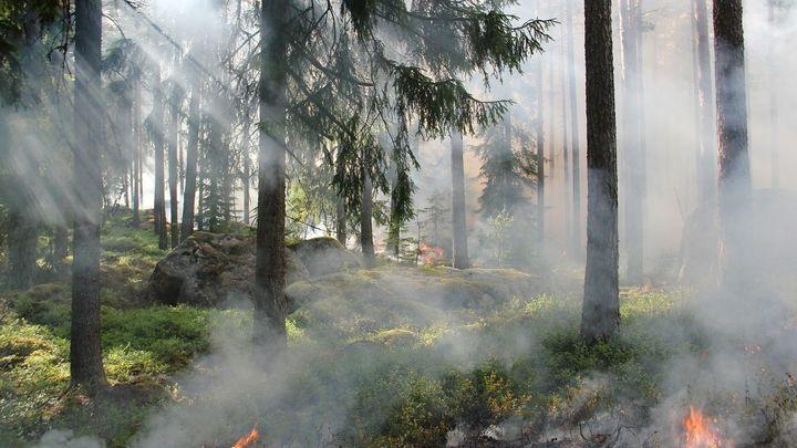 ¿Cuánto tarda la naturaleza en recuperarse de un incendio?