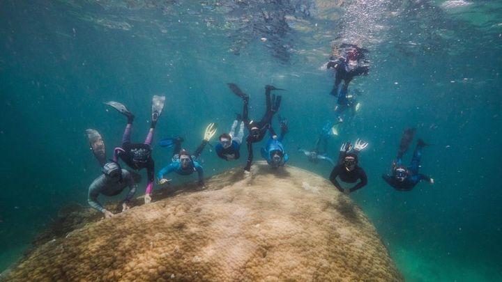 Submarinistas hallan un enorme coral de 400 años en la Gran Barrera australiana
