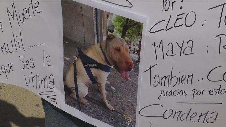 """Encuentran a sus perros muertos en la guardería canina de Madrid: """"Pedimos justicia"""""""
