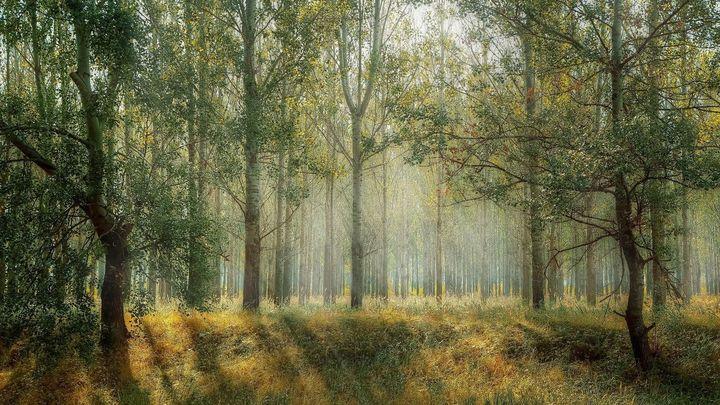 ¿Sabías que los árboles hablan entre ellos?
