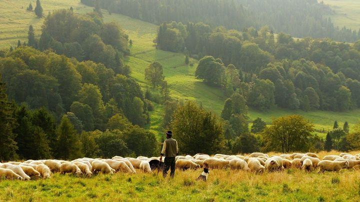 Visitamos la única escuela de pastoreo de la Comunidad de Madrid