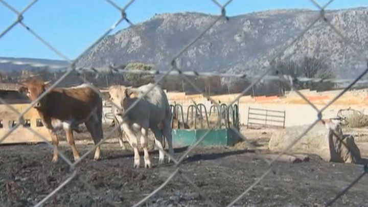 Madrid envía 30.000 kilos de pienso a los ganaderos de Avila afectados por los incendios