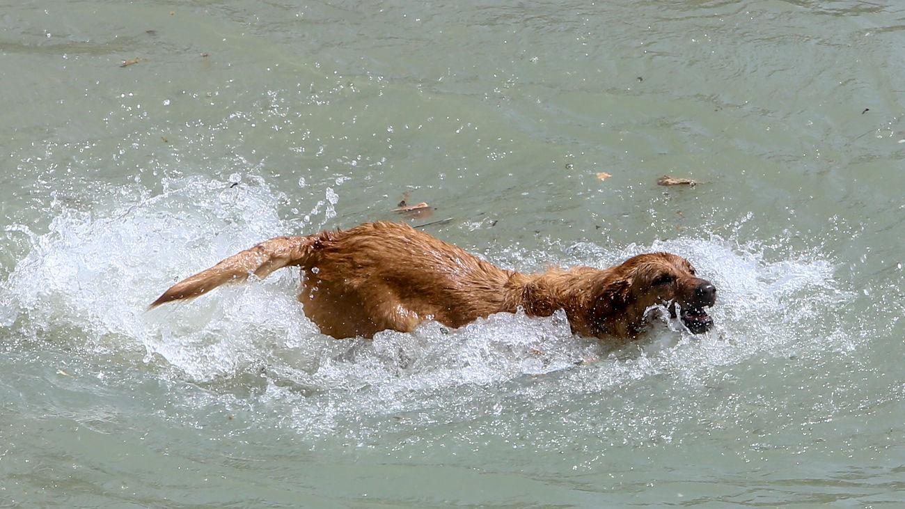 Parla cierra la temporada de piscinas, este domingo, abriendo sus puertas a los perros y sus familias