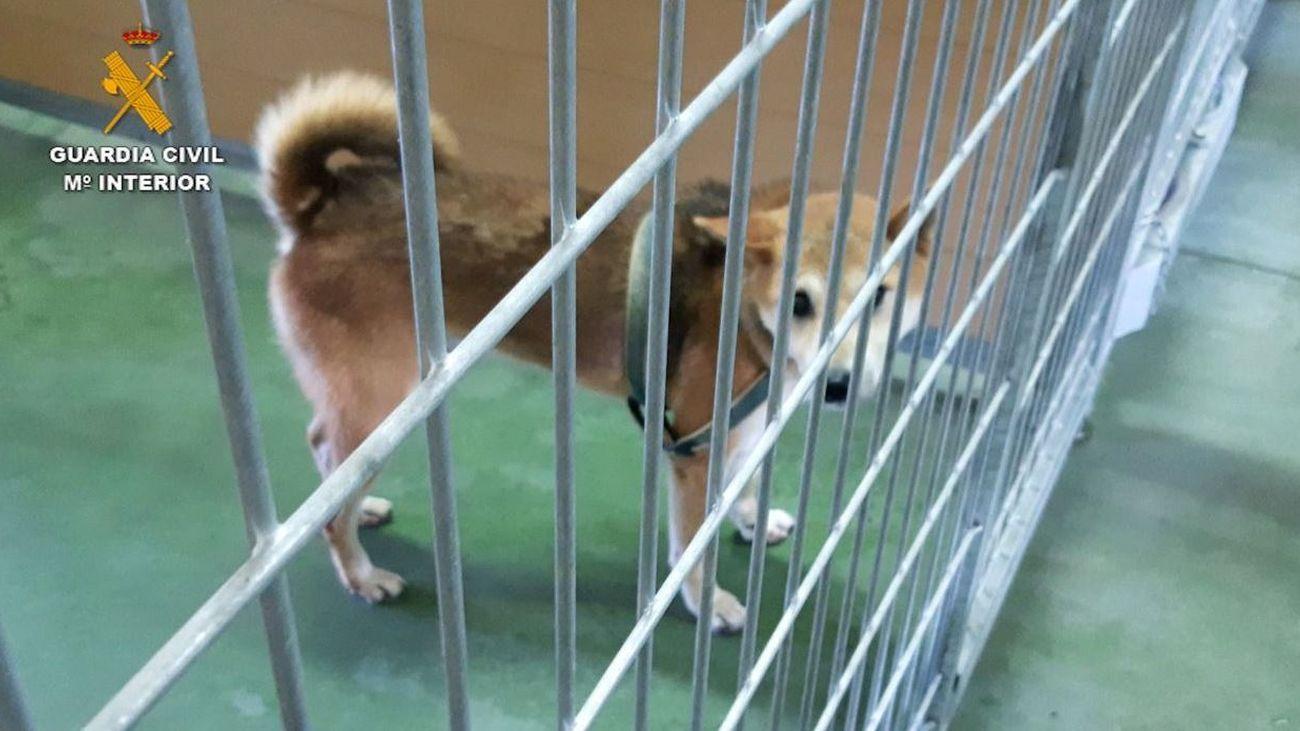 Dos detenidos por matar y maltrato a perros en guardería de El Álamo durante la pandemia