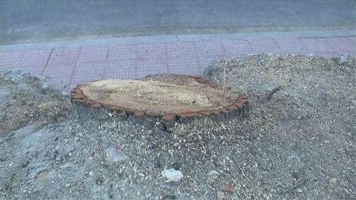 Los vecinos de Valdemoro denuncian la masiva tala de árboles centenarios