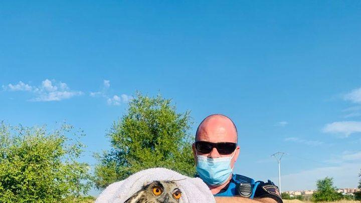 Policías de Leganés rescatan un ejemplar joven de búho real herido