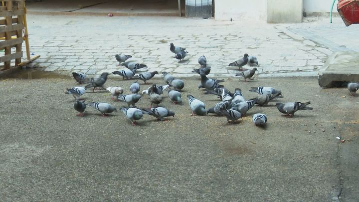 Las palomas invaden el barrio de Delicias
