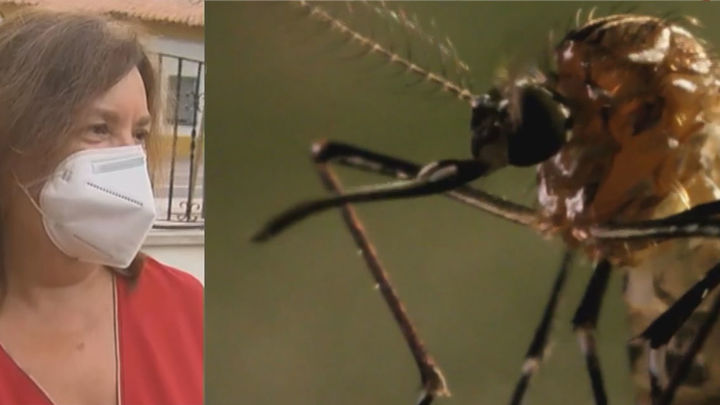 Consejos para evitar la proliferación del mosquito tigre en Rivas Vaciamadrid