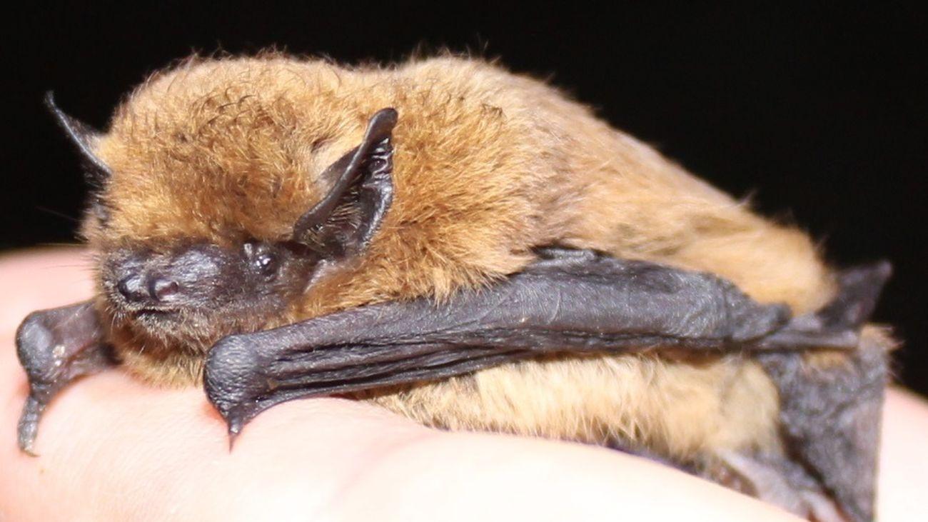 Imagen de un murciélago