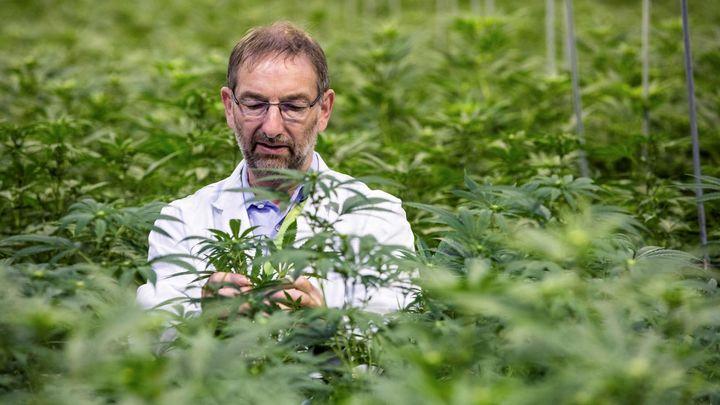 Autorizado en España el primer fármaco derivado del cannabis
