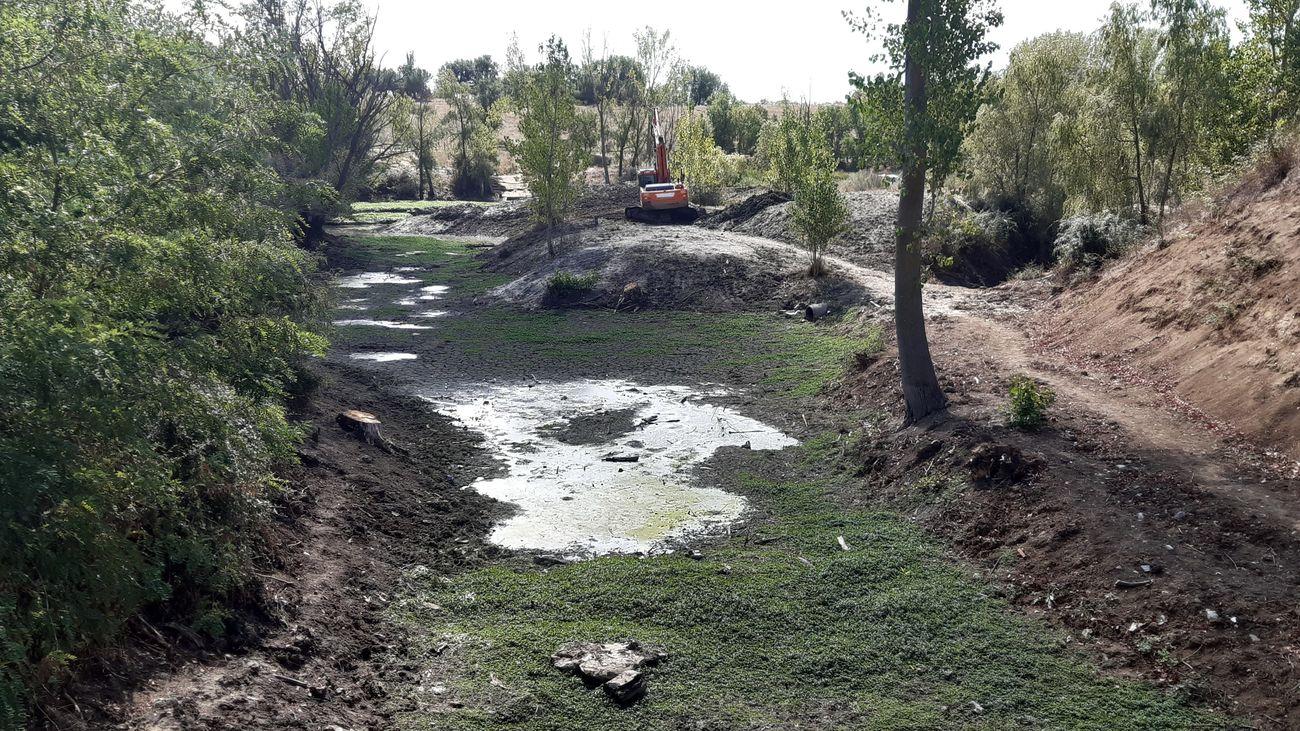 Una planta invasora podría afectar a la Casa de Campo y al Río Manzanares