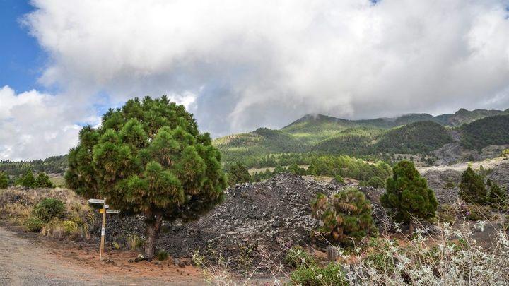 La Palma registra 45 sismos durante la noche, uno de 3.2 sentido por la población